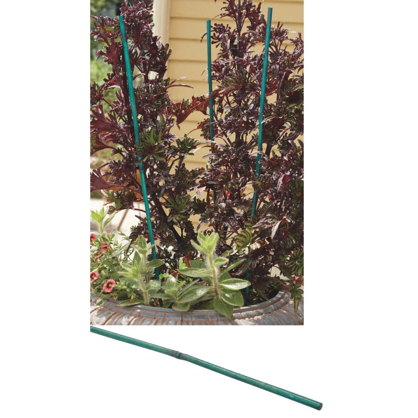 Bond 6 Ft. Green Bamboo Plant Stakes (6-Pack) Image 1